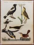 Plate 12. Rice bunting. 2. Female. 3. Red-eyed flycatcher. 4. Marsh wren. 5. Great Carolina wren. 6. Yellow-throat warbler